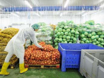 Компания «Лидер» откликнулась на призыв ЦБ вкладывать деньги в овощебазы - «Финансы»