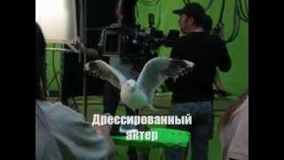 "ТРАСТ Эксклюзив. Съемки с Уиллисом  - «Видео - Банк ""ТРАСТ""»"