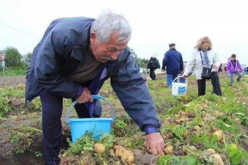 Невероятно дорогие овощи и фрукты - их вы вряд ли попробуете (фото) - «Финансы»