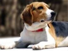 Появилась первая в мире соцсеть для животных - «Новости Банков»