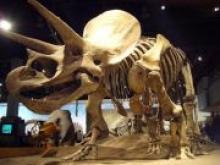 В Париже на аукционе продали два скелета динозавров за 2,2 млн долл - «Новости Банков»