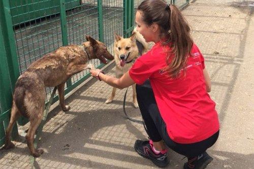 Команда Росбанка, Русфинанс Банка и банка «ДельтаКредит» провела благотворительную акцию помощи приютам для бездомных животных - «Новости Банков»