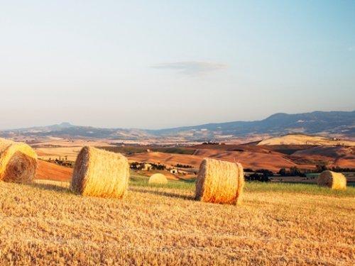 ВТБ развивает сотрудничество с Министерством сельского хозяйства РФ - «ВТБ24»