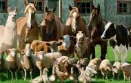 Россельхознадзор запрещает ввоз зарегистрированных вРК ветпрепаратов - «Экономика»