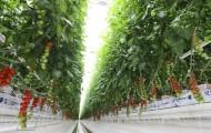 В Актюбинской области иностранные инвестиции приносят плоды - «Экономика»