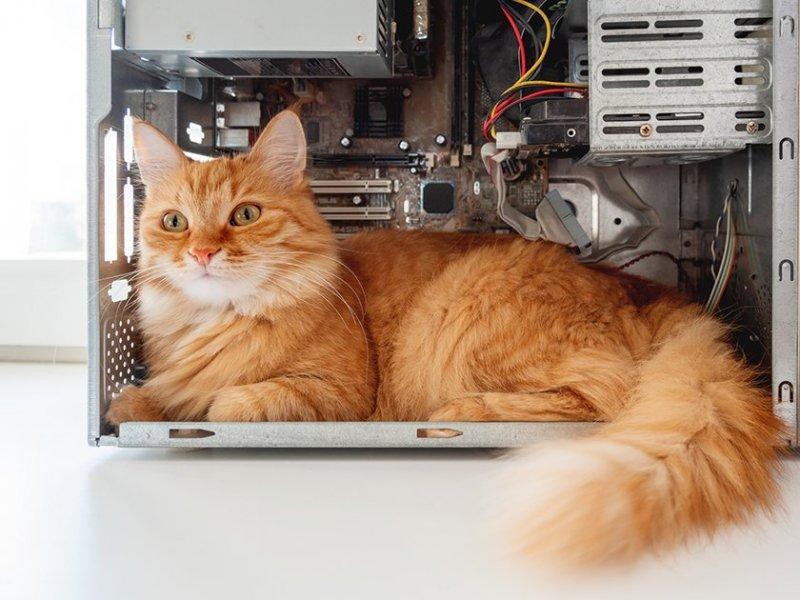 Провода, коты и прочие неприятности - «Тема дня»